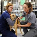 What's Needed Before You Apply to Vet Tech School?